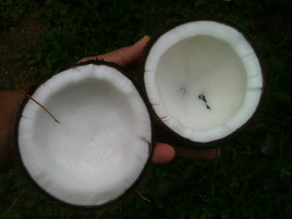 Huile de coco - ses bénéfices pour les cheveux
